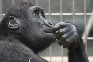 thinking primate